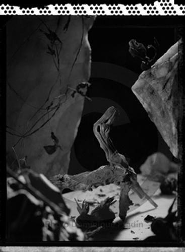 Diplodocus, 1996, Polaroid 55.